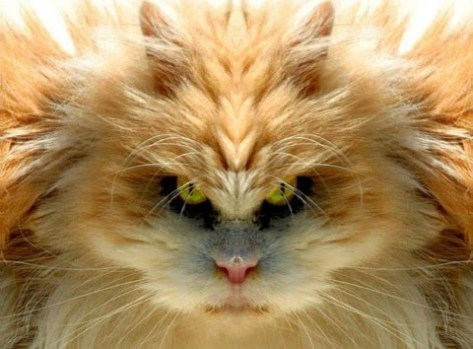 scary-cat